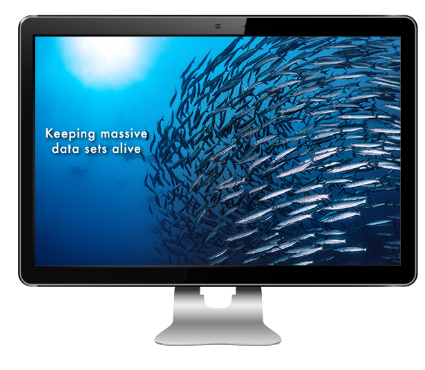 Image showing a large shoal of fish in order to symbolise Large file data sets